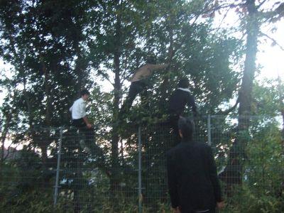 木登り少年